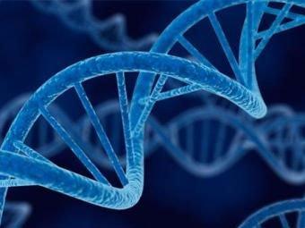 Exercício de resistência ajuda no reparo do DNA e o consequente combate ao envelhecimento