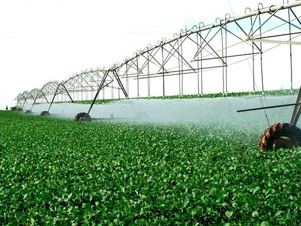 O objetivo é conhecer o nível de infestação e incidência das pragas e doenças nas lavouras irrigadas