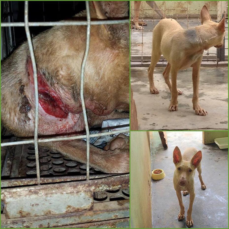 Animal resgatado e tratado pela L.O.B.O.   Foto: Divulgação