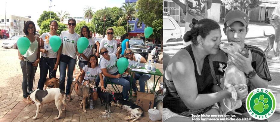 Feira de adoção da L.O.B.O. / Bicho da L.O.B.O. adotado   Fotos: Divulgação
