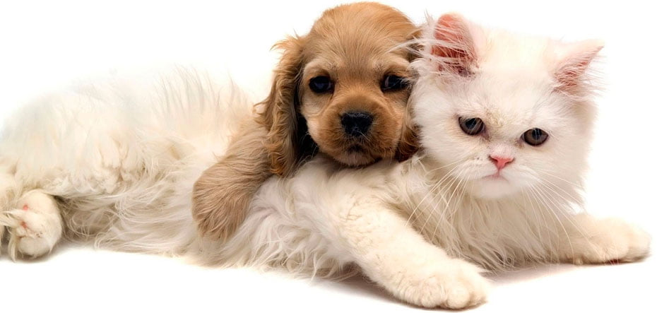 Sabado-e-dia-de-vacinar-caes-e-gatos-em-Barreiras-01.jpg