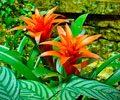 flores-que-precisam-de-muita-luz-e-pouca-agua-sao-ideais-para-as-estacoes-mais-quentes-do-ano-cp-destaque