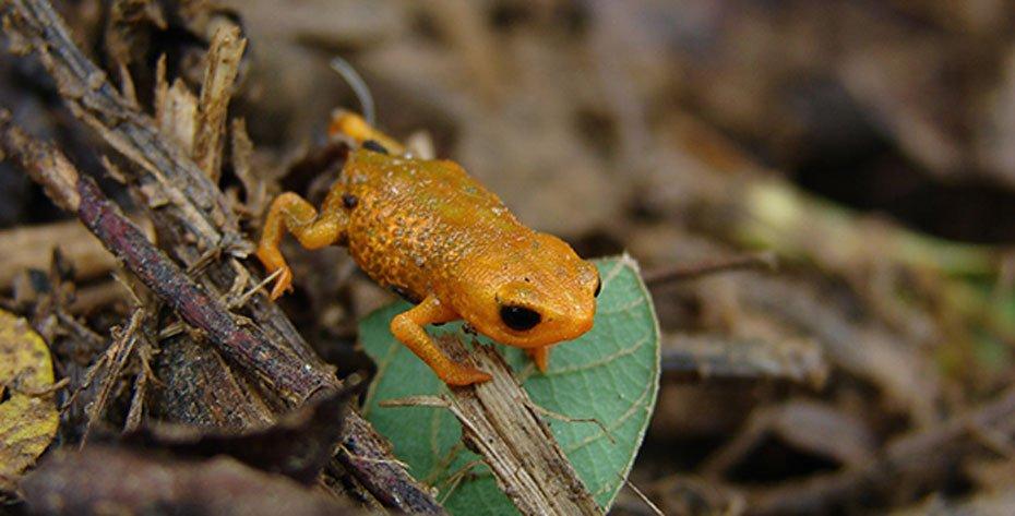 Foto: Fundação Grupo Boticário