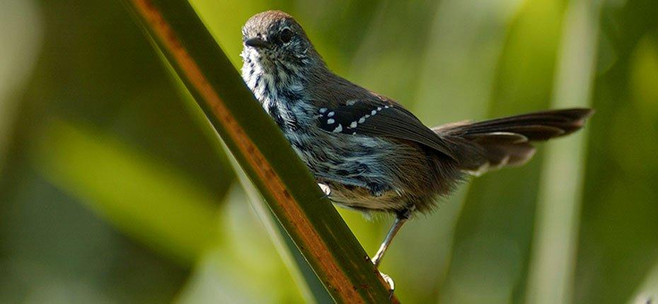 Foto: Haroldo Palo Jr./Fundação Grupo Boticário